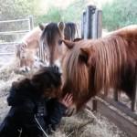 médiation animale