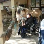Cheval et handicap
